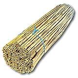 Hiss Reet® Schilfrohrhalme MEDIUM als Insektenhotel Füllmaterial I Ideal auch als Niströhren für Wildbienen, Bienenhotel geeignet I Verschiedene Längen (L: 80 cm Länge)