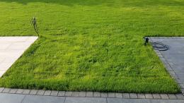 Neuer Rasen nach 4 Wochen