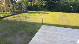 Rasen säen - 10 Tage nach Rasenaussaat