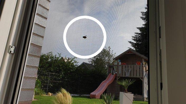 Fliegengitter als Insektenschutz: Fliege am Fenster